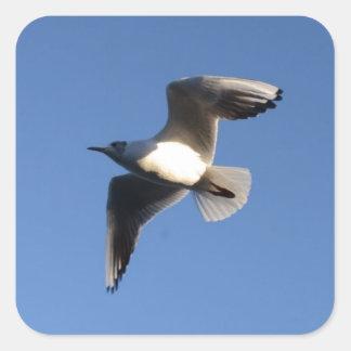 Little Gull Square Sticker