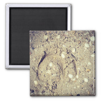 little hoofprint in the sand magnet