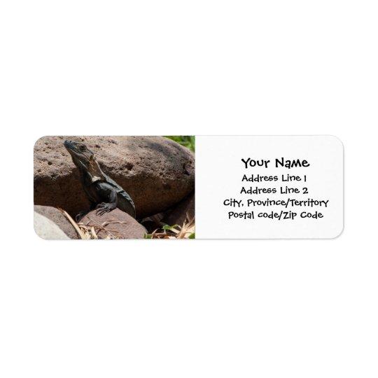 Little Iguana on the Rocks