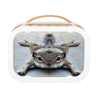 Little Joey Ground Lunch Box