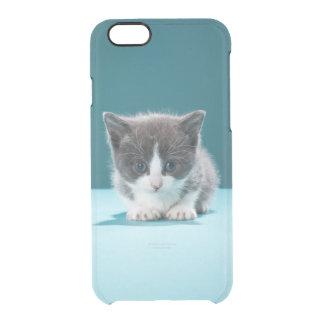 Little Kitten Clear iPhone 6/6S Case