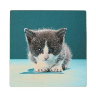Little Kitten Wood Coaster