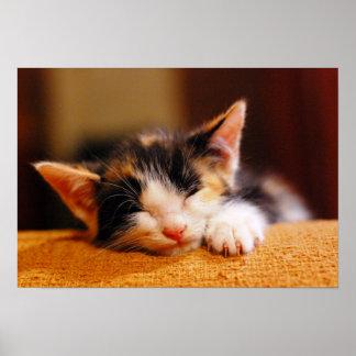 Little Kitty Sleeping Poster