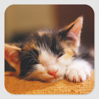 Little Kitty Sleeping Square Sticker