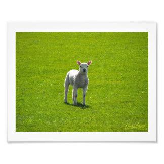 Little Lamb Photo Art