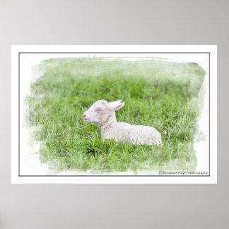 Little Lamb Watercolour Photographic Print