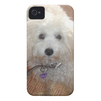 Little Miss Pretty Poodle iPhone 4 Case