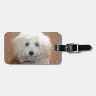 Little Miss Pretty Poodle Luggage Tag