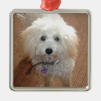 Little Miss Pretty Poodle Silver-Colored Square Decoration