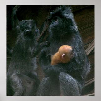 LIttle Monkey Family Poster