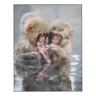 Little monkeys in hot spring, Japan.