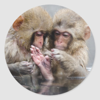 Little monkeys in hot spring, Japan. Classic Round Sticker