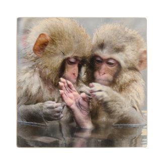 Little monkeys in hot spring, Japan. Maple Wood Coaster