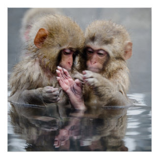 Little monkeys in hot spring, Japan. Poster
