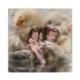 Little monkeys in hot spring, Japan. Wood Coaster