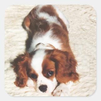 Little One Cavalier King Charles Spaniel Sticker