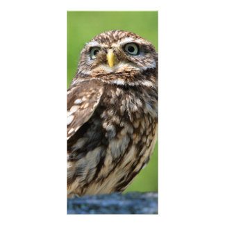 Little owl bird photo custom name bookmark custom rack cards