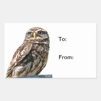 Little Owl bird photo to, from sticker, stickers