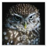 Little Owl Print Photo Art