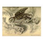 Little Owl:  Vintage Jardine's illustration card Postcard