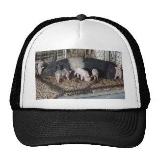 Little Piggies Trucker Hats