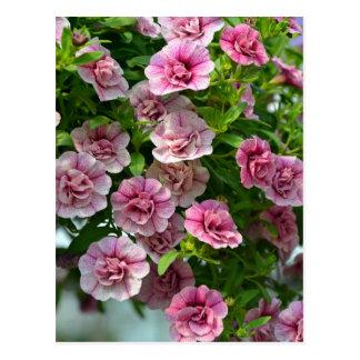 Little pink petunias in spring postcard