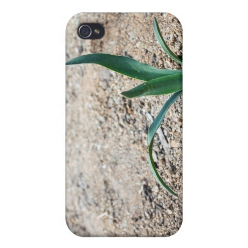 Little Plant iPhone 4/4S Covers