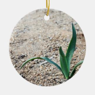 Little Plant Round Ceramic Decoration
