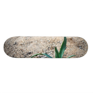 Little Plant Skateboard Decks