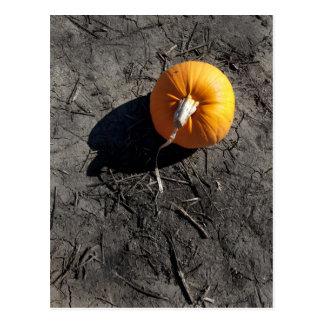 Little Pumpkin Postcard