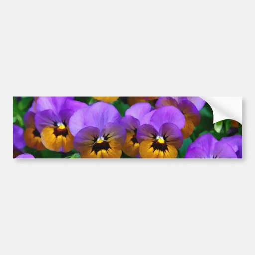 Little Purple Pansies Trimmed in Yellow Gold Bumper Stickers