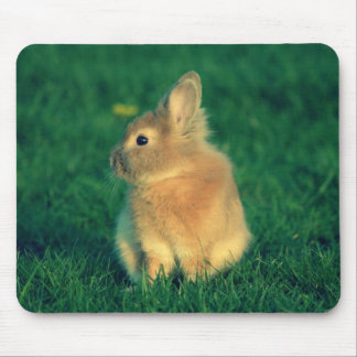 Little rabbit mouse pad