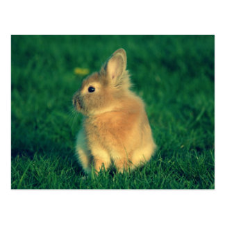 Little rabbit postcard