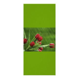 Little_Rain_jpeg Rack Card Design