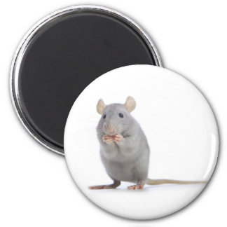little rat magnet