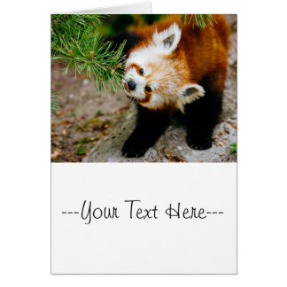 Little Red Panda With Fern - Animal Photography Card