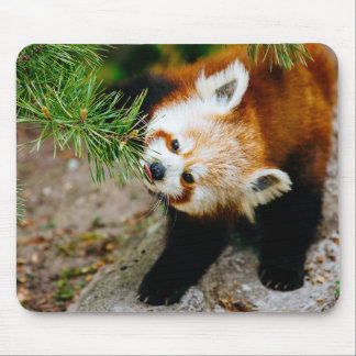 Little Red Panda With Fern - Animal Photography Mouse Pad