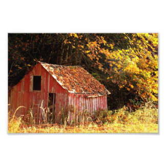 Little Red Shed. Photo Print
