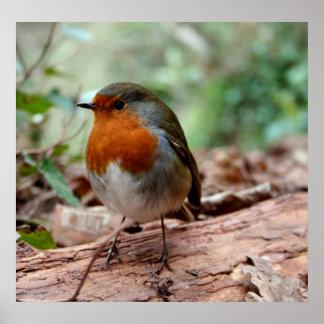 Little Robin Poster