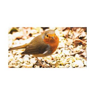 Little Robin Redbreast Canvas Print
