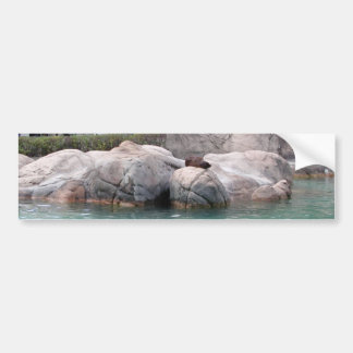 Little Seal Rests Bumper Sticker