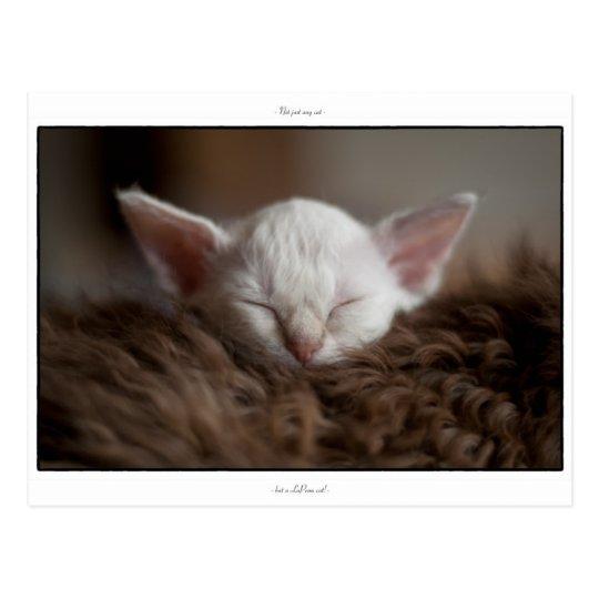 Little Sleepy - LaPerm Kitten Postcard