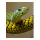 Little Snaked Postcard