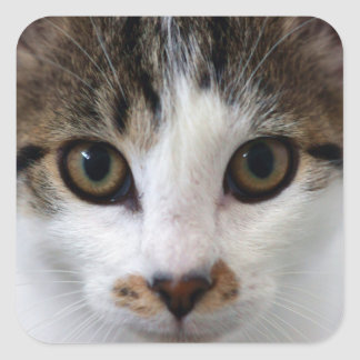Little Tabby Face Square Sticker