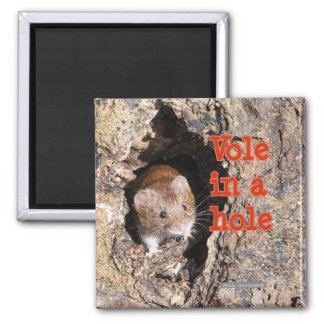 Little Vole in a Hole Fridge Magnet