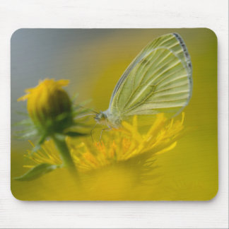little white butterfly mouse pads