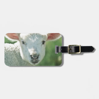Little White Lamb Luggage Tag