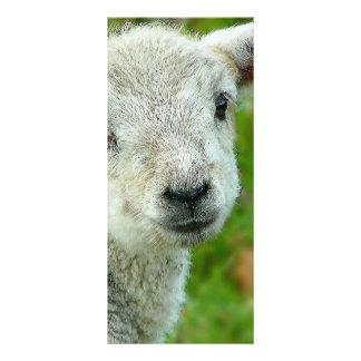Little White Lamb Customized Rack Card