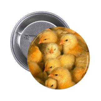 Little Yellow Chicks 6 Cm Round Badge