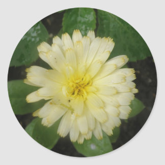 Little Yellow Marigold Stickers